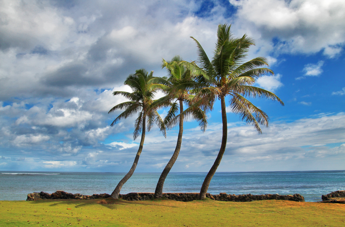 Palm trees in Hau'ula