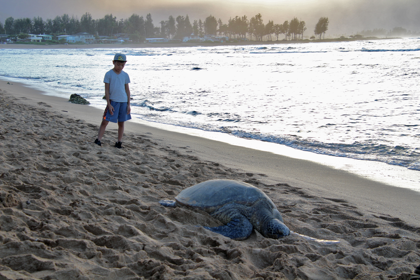 Another turtle on the beach on the North Shore.